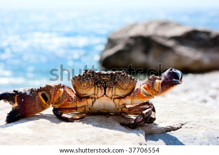 Crab basking in the sunshine with ocean in the background - stock photo