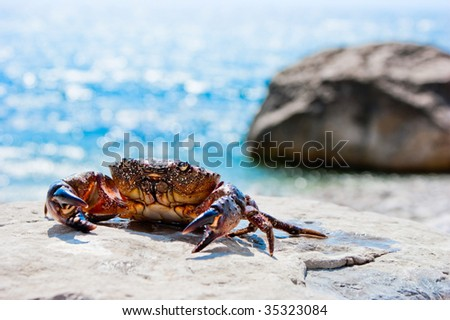 Crab basking on the stone with ocean in the background - stock photo