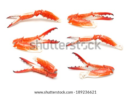 Crab claw isolated - stock photo