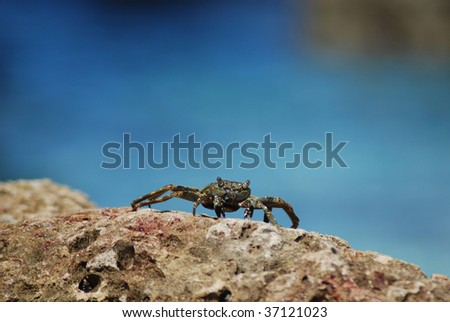 Crab close-up at stone with sea background - stock photo
