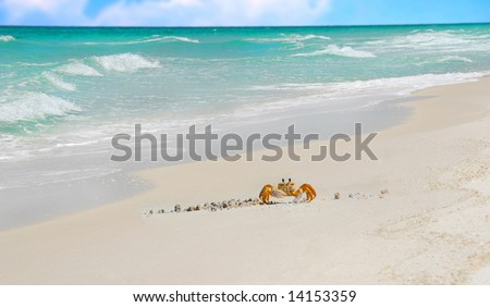 Crab crawling on beach with pretty ocean in distance - stock photo