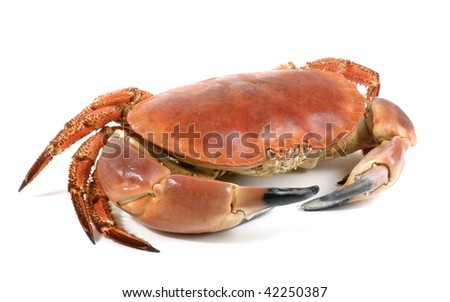 Crab isolated on white - stock photo