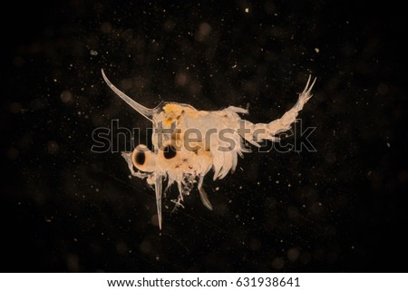 Fish Larvae Stock Images, Royalty-Free Images & Vectors ...