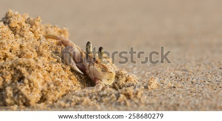 Crab Nest - stock photo