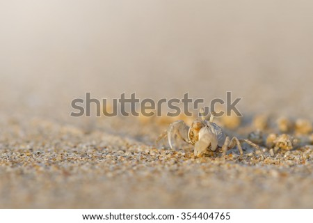 Crab,Ocypode (Ocypodidae),Wind crab are playing on the sand - stock photo