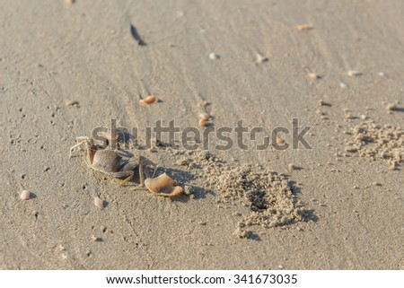 crab on a beach