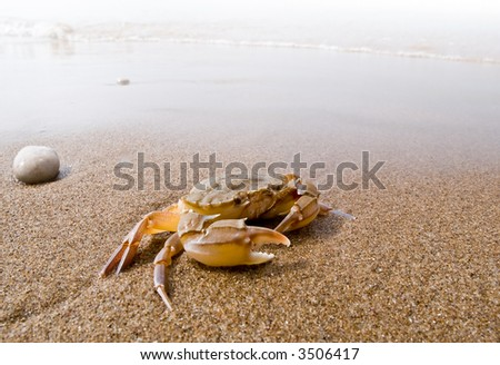 Crab on a beach - stock photo