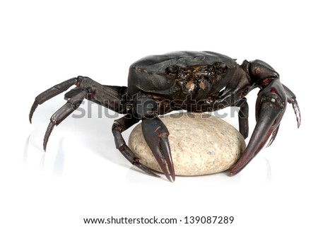 crab on stone isolated on white background