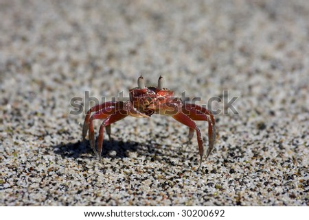 Crab on the beach of Manuel Antonio National Park in Costa Rica