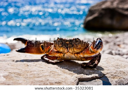 Crab on the stone with ocean in the background - stock photo