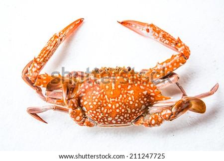 Crab on white background - stock photo