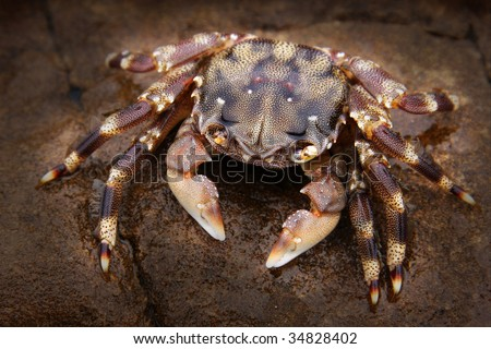 crab sitting on a rock - stock photo