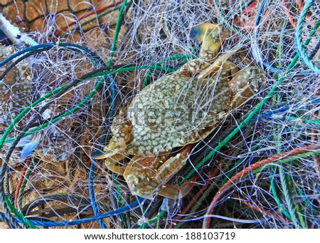 Crabs in a fishing nets near the beach - stock photo