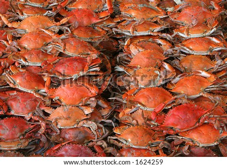 crabs sea food - stock photo