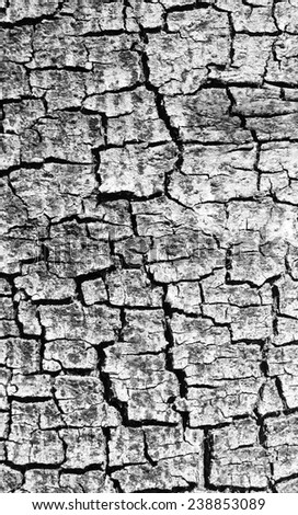 crack on gray tree bark texture - stock photo