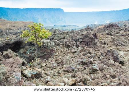 Cracked barren bottom of Kilauea Crater with ohia lehua plants in Hawaii Volcanoes National Park, Big Island, Hawaii - stock photo