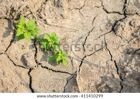 Cracked Brown Soil with some grass