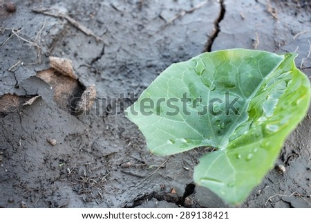 Cracked dry soil with leaves - stock photo
