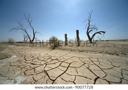 Cracked earth and dead trees - stock photo