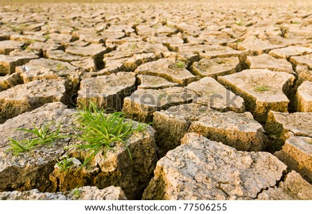 Cracked earth with grass , metaphoric for climate change and global warming. - stock photo