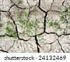cracked ground,a global warming concept - stock photo