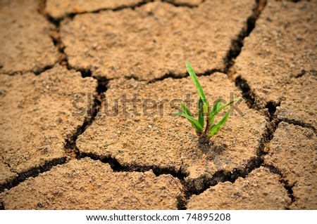 Cracked ground and survival living thing - stock photo