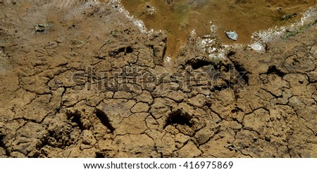 Cracked mud texture with water - stock photo