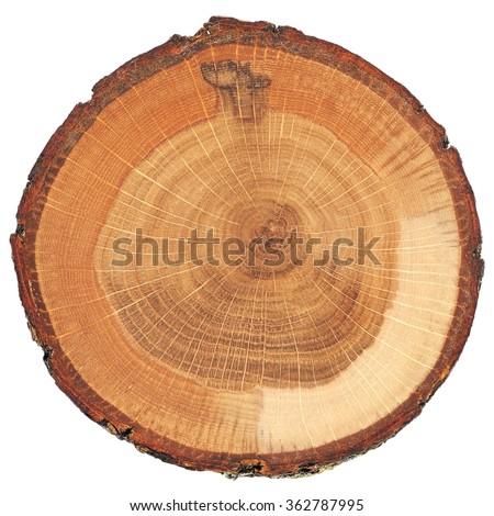 Cracked oak split with bark isolated - stock photo