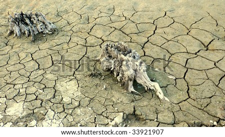 Cracked, parched land after a drought, animal footprint and trunk