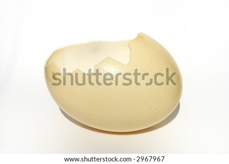 cracked shell (Ostrich egg) - stock photo