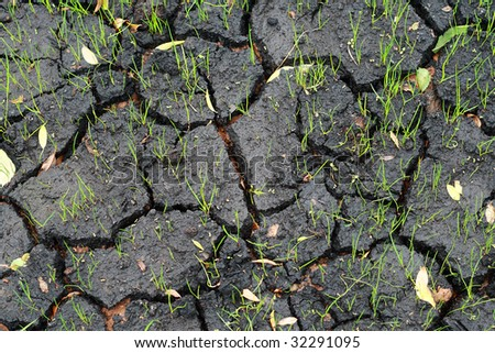 Cracked wet ground and new grass blades - stock photo