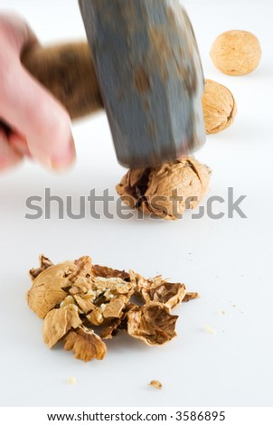 Cracking walnuts with a sledgehammer - stock photo