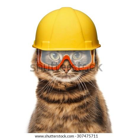 Craftsman cat in helmet - stock photo