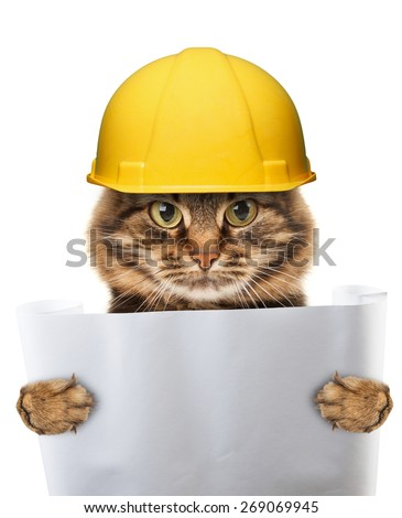 craftsman cat in white background - stock photo