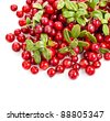 cranberries heap corner border isolated on white background - stock photo