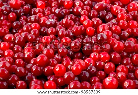 cranberry background Fresh red berry - stock photo