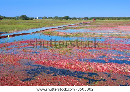 Cranberry Bog - stock photo