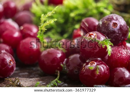 Cranberry frost moss. Berries are on the bark of a tree. Hoarfrost, Snow on the berries. Natural background. Macro background. raindrops - stock photo