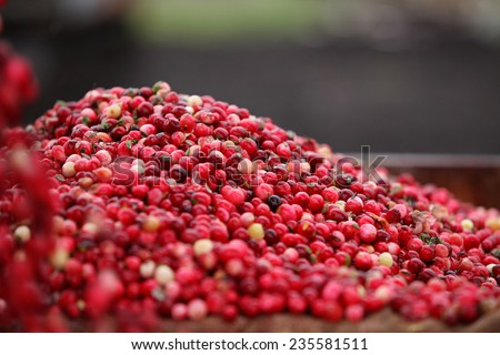 Cranberry Harvesting - stock photo