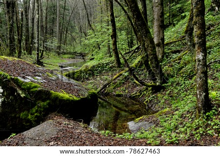 Cranberry Wilderness, Monongahela National Forest, West Virginia, USA - stock photo