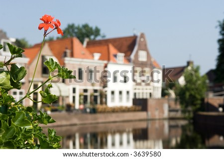Crane Bills / Geraniums with an old village as back-drop