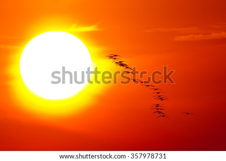 Crane flying into the sun in the national park Hortobágy
