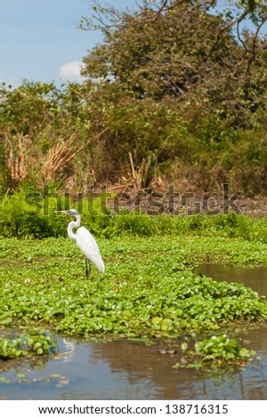 Crane in the Istian River on Ometepe Island - stock photo