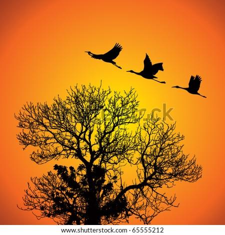 Crane Silhouettes against orange sky. - stock photo