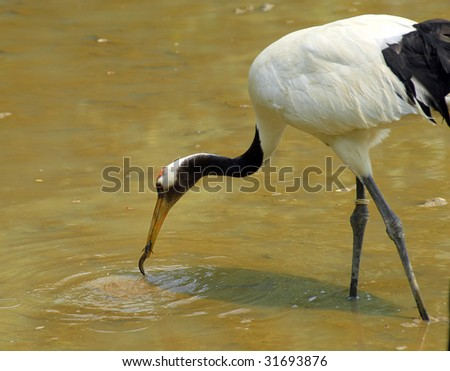 crane with gree grass colors in the background (See more birds in my portfolio). - stock photo