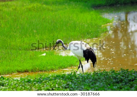 crane with green grass colors in the background - stock photo