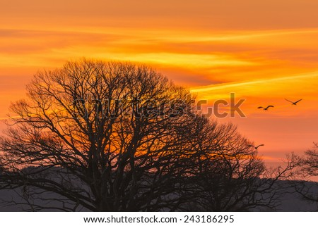 Cranes and trees in silluet in morning light