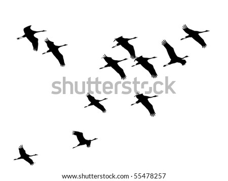 Cranes-fly in formation, silhouette, illustration