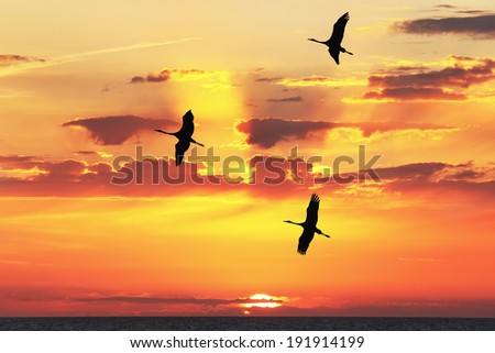 Cranes flying silhouettes at Mediterranean sunset - stock photo