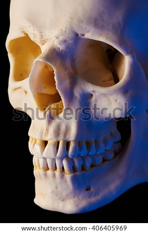 Cranial Bone (Short lighting, blue cast)